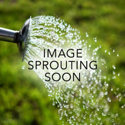 img-coming-soon-sprout