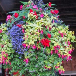 Hanging Baskets Spring