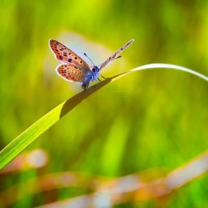 Butterfly-attracting Perennials